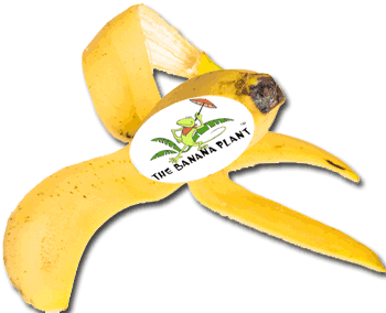 the banana plant kids music gulfalive kids song